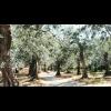 Luigi Tega, Lirys, Olivenolie Extra Vergine, 50 cl.-06
